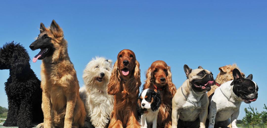 National Dog week