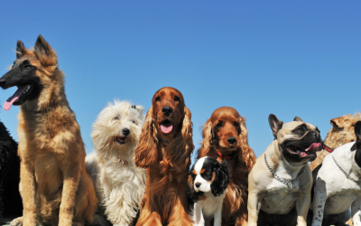 A celebration of National Dog Week