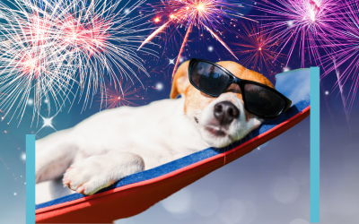 Relax your animal in firework season