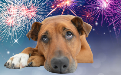 Why some animals get firework phobia