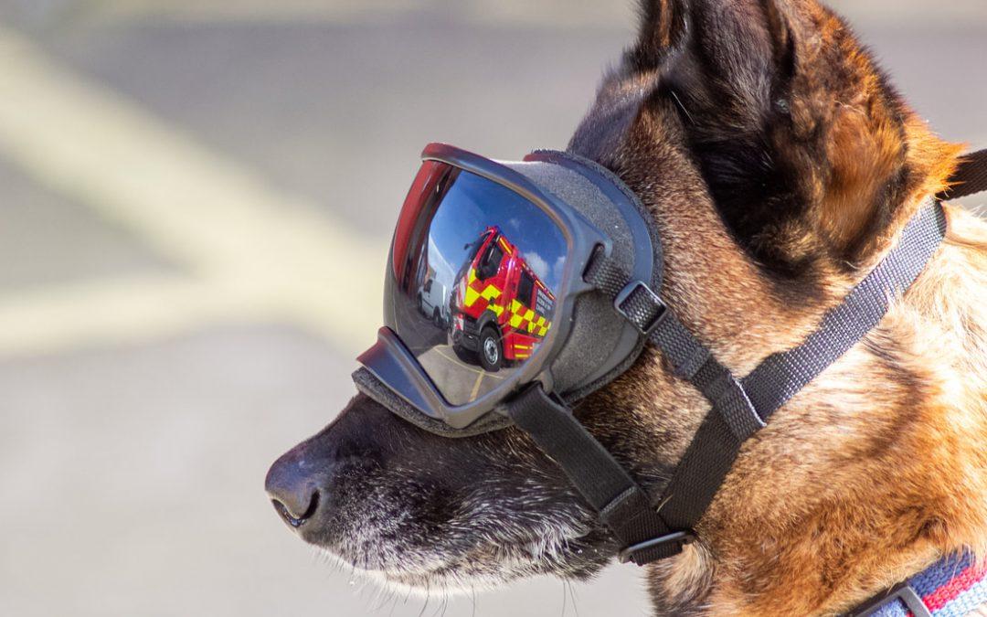Fire Dog Kai
