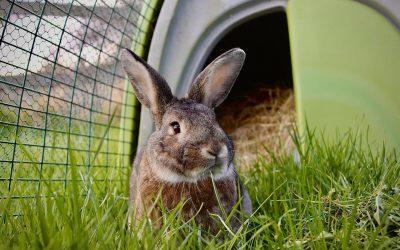 An Easter Bunny Tale
