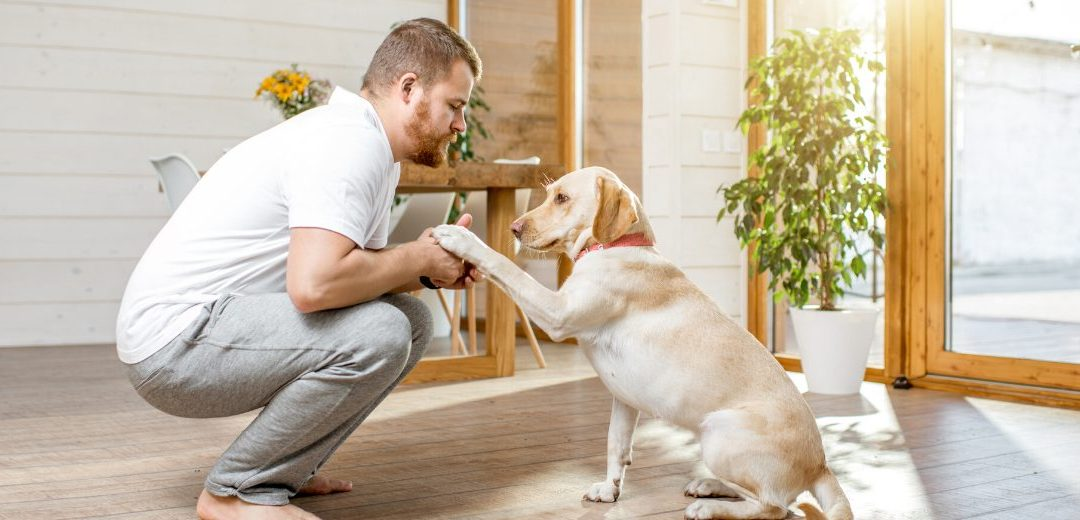 Man with golden Labrador dog