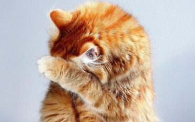Stress & Urinary Issues In Cats