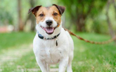 A Charter For Dog Training & Behaviour