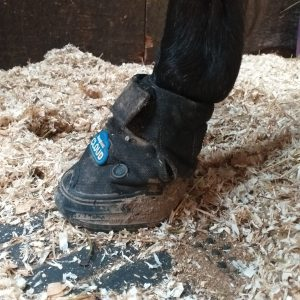 Cloud boot for laminitis in horses