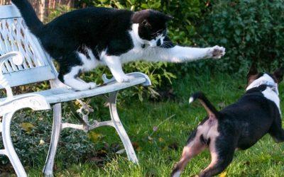 Gremlin the Cat and his Photizo Treatments