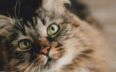 Cats and the Dreaded Fur Balls… Does a Raw Diet Help?